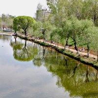 отражение в городском пруду :: Вера Азсоль