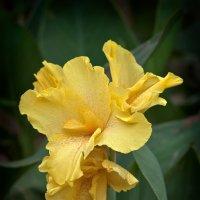 цветок :: сергей агаев