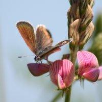 Бабочка :: Валентин Родоманов