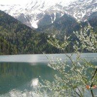 Озеро Рица :: Светлана Винокурова