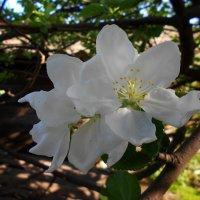 Цветок :: Наталия Зёма