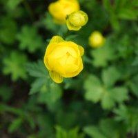 Цветок в лесу. :: Victoria Efanova