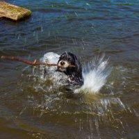 Плыть по-собачьи. :: Юля Стаброва