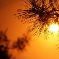 На фоне заката :: Галина Гегешидзе