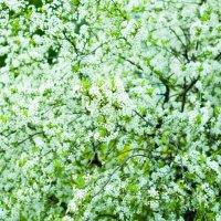 Весне дорогу :: екатерина иванова