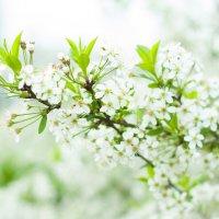 Весенний цвет2 :: екатерина иванова