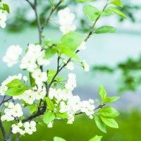 Весенний цвет :: екатерина иванова