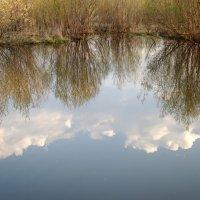 Глядятся в воду облака :: Елена Перевозникова