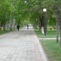 Аллея в парке :: Анна Фряуф