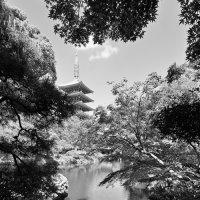 Японский сад :: Sergei Khandrikov