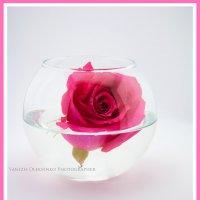 Rose :: Алиса Еникеева