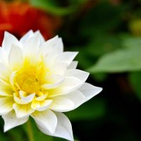 Цветок в парке :: Дмитрий Гецеров