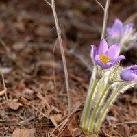 Весна :: igor1979 R