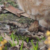 Кот и Мышка :: Маша Смирнова
