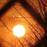 Подглядывающее солнце :: Маша Смирнова
