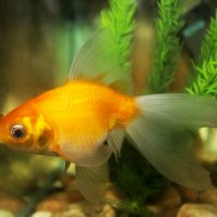 Рыбка :: Yuriy F