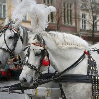лошадки :: Татьяна Панчешная