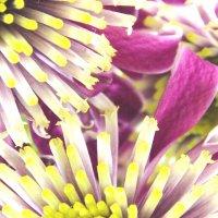 цветы :: Олеся Павловская
