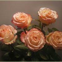 Розы абрикосового цвета :: Эля Юрасова