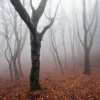 Лес в тумане :: Nataliya Barinova