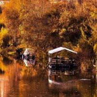 Золотая осень... :: Надежда