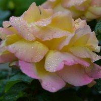 После дождя... :: Александр Филатов