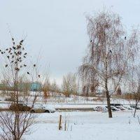 Удивительно тёплая зима. :: bemam *