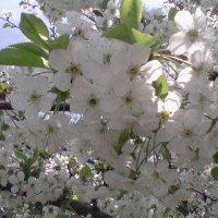 весна :: Галина
