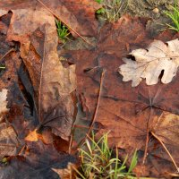 Осень :: Андрей Тыльчак
