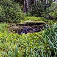 Wild pond :: Sergey Sergaj
