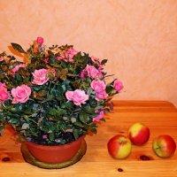 Розы и яблоки :: Nina Yudicheva