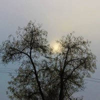 Осенний закат :: Светлана
