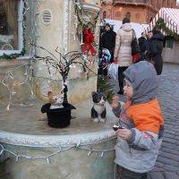 Коты и дети  кругом! :: imants_leopolds žīgurs