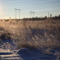 морозное утро :: Вадим