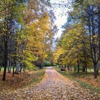 Пора листопада :: Виталий