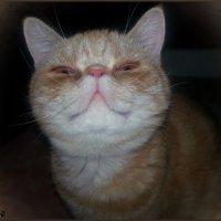 Так выглядит САМО БЛАЖЕНСТВО!!!)))ЧЕШИрский кот))))))))))) :: Людмила Богданова (Скачко)