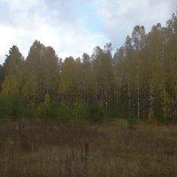 Осенний лес. :: Николай Масляев