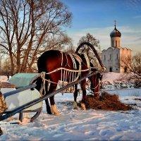 Холодно однако! :: Владимир Шошин