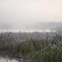 Утро...туман...первые заморозки... :: Валентина Данилова