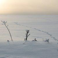 По дороге к солнцу... :: Sergey Apinis