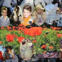 Новогодняя поляна фотографа :: Наталья Золотых-Сибирская