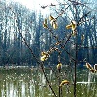 весна :: Леонид Натапов