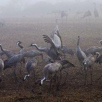 птицы на отдыхе :: Валерий Цингауз