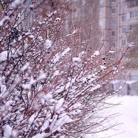 Зима пришла :: Сергей Афанасьев