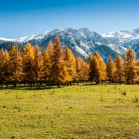 Золотая осень :: Яна Старковская