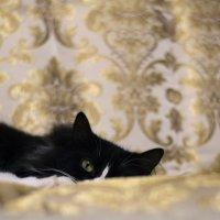 Кошка :: Евгений Кучеренко