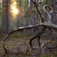 чудище лесное :: liudmila drake