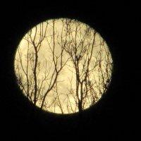 Вечер, восход луны :: Mariya laimite