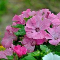 Летние цветы.. :: Юрий Анипов