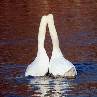 Любовь-это,когда двое смотрят в одну сторону... :: Наталья